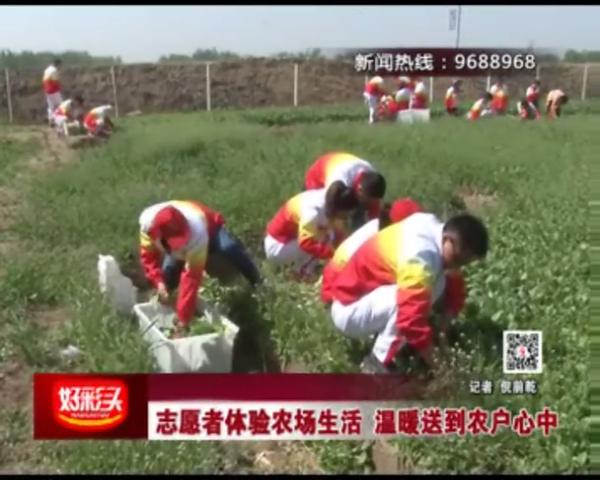 志愿者体验农场生活  温暖送到农户心中