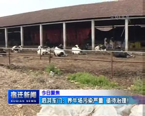 今日聚焦 泗洪车门:养牛场污染严重 亟待治理!