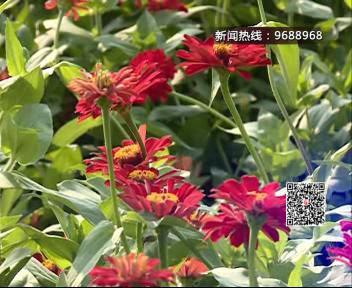 """衲田新设花海剧场 """"十一""""黄金周等您来嗨!"""
