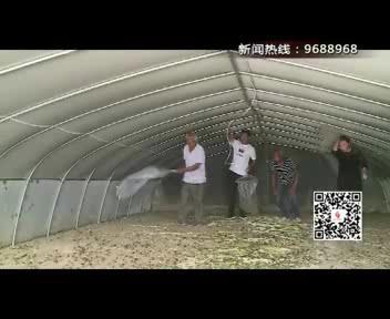 """【今晚讲述】石现成:蚂蚱""""请进""""大棚 """"害虫""""变""""金豆"""""""