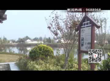 宿城村民家有棵百年枣树 每年挂枣全村人尝