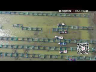 """""""水上春耕""""图 蟹农劳作忙"""