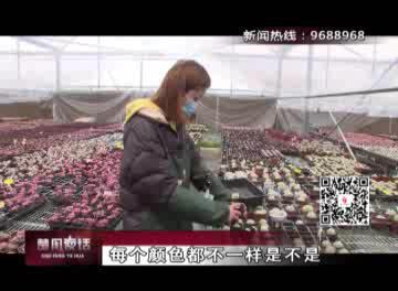 """""""疫""""线百态:95后网红小花农 直播卖花日进2000元"""